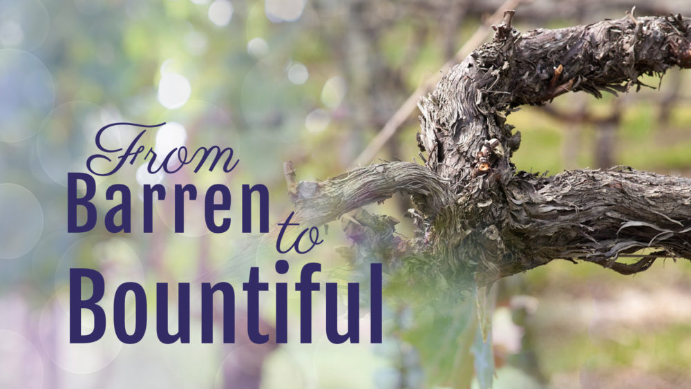 What Matters Most: From Barren to Bountiful (2 of 5) Image