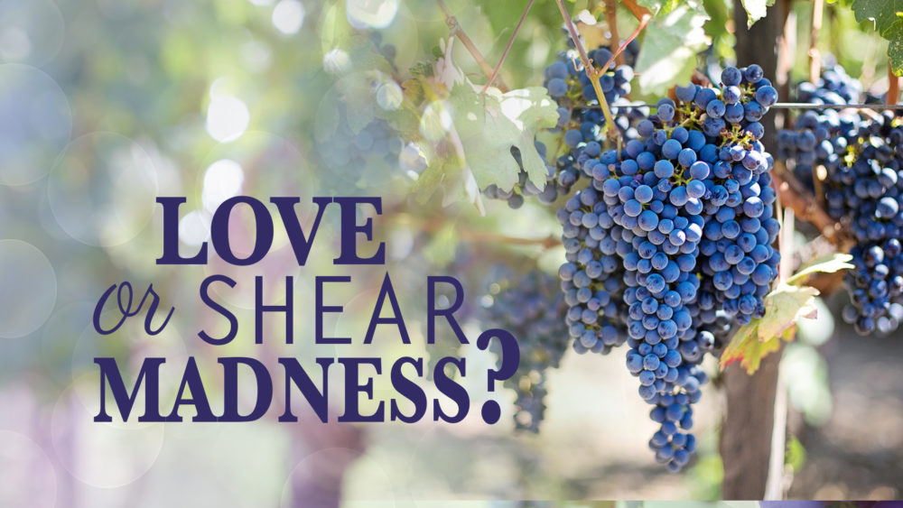 What Matters Most: Love Or Shear Madness? (3 of 5) Image